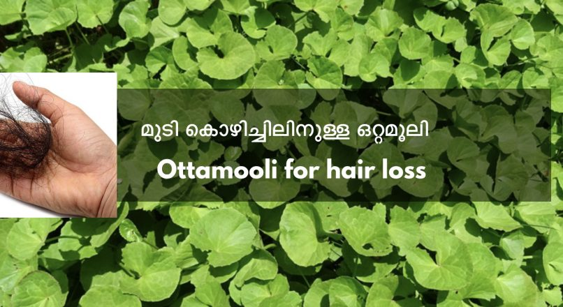 Mudi kozhichilinulla ottamooli – മുടി കൊഴിച്ചിലിനുള്ള ഒറ്റമൂലി – Ottamooli for hair loss