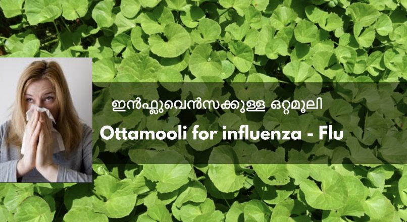 Influenza kkulla Ottamooli – ഇൻഫ്ലുവെൻസക്കുള്ള  ഒറ്റമൂലി – Ottamooli for influenza – Flu