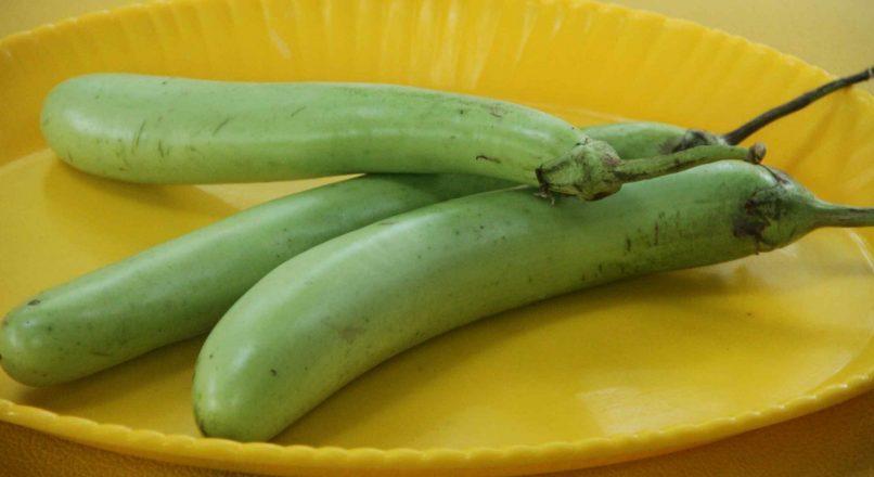 Benefits of Bottle Gourd ചുരക്ക – ചുരക്കയുടെ ഗുണങ്ങൾ– Churakkayude Gunangal