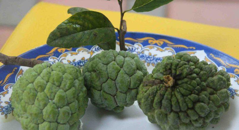 Benefits of Custard Apples Sita Pazham – സീതപ്പഴത്തിൻറ്റെ ഗുണങ്ങൾ– Seethapazhathintea Gunangal