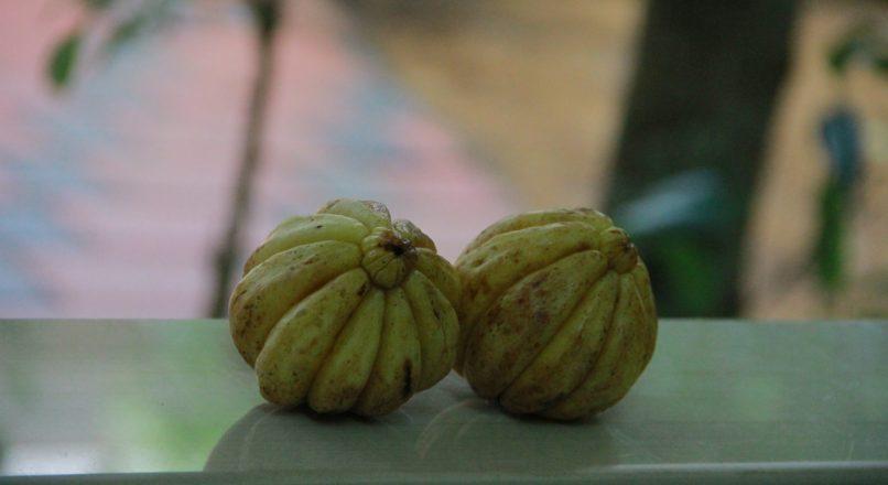 benefits of malabar tamarind – കുടംപുളിയുടെ ഗുണങ്ങൾ – kudampuliyudea gunangal