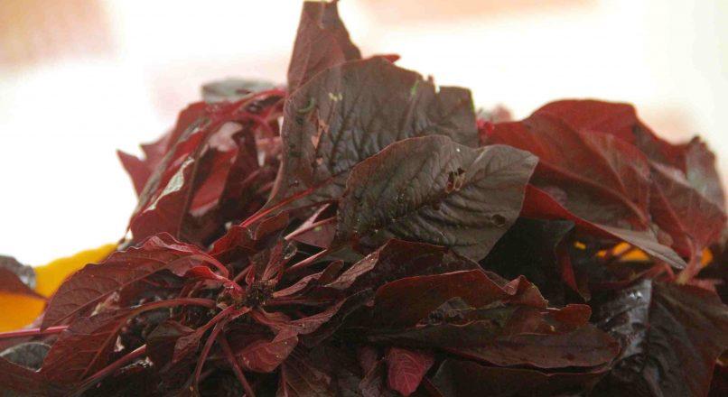 Benefits of Spinach – ചീരയുടെ ഗുണങ്ങൾ– Cheerayudea Gunangal